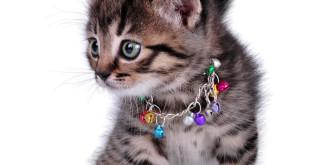 gatto campanello